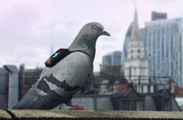 Pigeon-Air-Patrol-Feature-Image-03162016